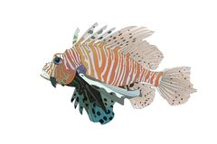 Red Lionfish. Vector Red Lionfish (Pterois volitans Stock Photos