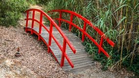 Red little bridge in the middle of garden. Surrounded by vegetation stock photography