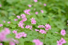 Red little flowers. Green leafs green fields spring Stock Photo
