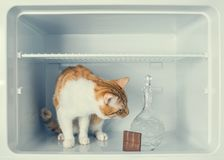 Red little kitten with crystal carafe and chocolate in the fridge Royalty Free Stock Photo