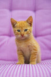 Red little kitten Stock Photography