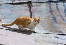 Red little kitten Stock Photos