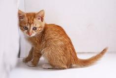 Red little kitten on windowsill close up photo. On window background Stock Photo