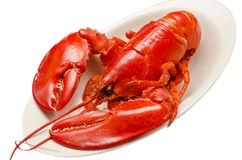 Red lobster Royalty Free Stock Photography