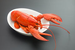 Red Lobster Stock Photos