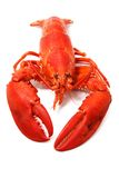 Red lobster. Cooked red lobster isolated on white Stock Photo