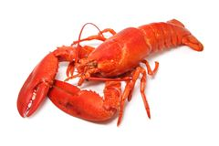 Red lobster stock image