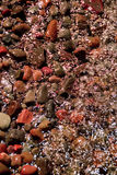 Red Lobster Beach Rocks Stock Photo
