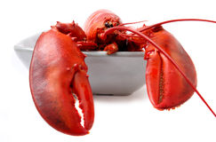Red lobster isolated on white background Royalty Free Stock Photos