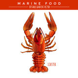Red Lobster. Marine Food Royalty Free Stock Image