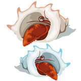 Red lobster peeking out of shell. Vector  Stock Image