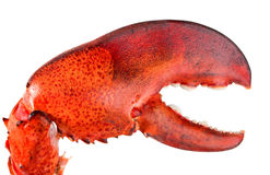 Red lobster's claw Stock Photo