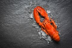 Red lobster seafood with ice on dark backgroud top view. Red lobster seafood with ice dark backgroud top view stock photo