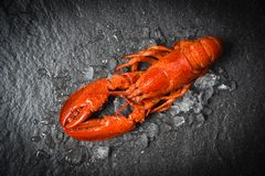 Red lobster seafood shrimp with ice on dark backgroud top view. Red lobster seafood shrimp with ice dark backgroud top view stock photo