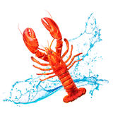 Red lobster with water splashes Royalty Free Stock Images