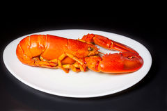 Red lobster on a white plate Royalty Free Stock Images