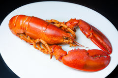 Red lobster on a white plate Stock Photos
