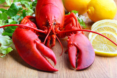 Red Lobster on wood Stock Image