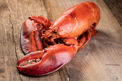 Red lobster Royalty Free Stock Image