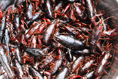 Red lobsters Royalty Free Stock Photography