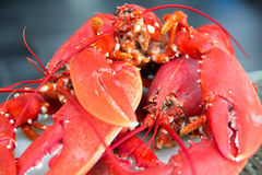 Free Red Lobsters Royalty Free Stock Photography - 47293757
