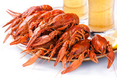 Red lobsters with beer Stock Photography