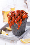 Red lobsters with beer Stock Image