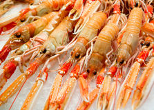 Red lobsters on ice. Whole red Japanese lobsters (Metanephrops japonicus) displayed on crushed ice in the market Royalty Free Stock Photo