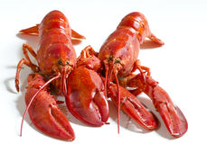 Red lobsters. Isolated in white backgorund Royalty Free Stock Photos