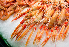 Red lobsters and shrimps on ice. Fish market royalty free stock photos