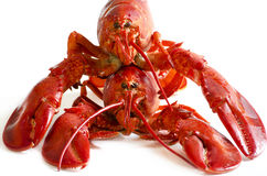 Red lobsters. Two Fresh raw Red lobsters Royalty Free Stock Photos