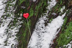 Red lollipop heart shaped on the tree. Red lollipop heart shaped on the snowy bark of the tree in winter park Stock Images