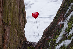 Red lollipop heart shaped on the tree. Red lollipop heart shaped on the snowy trunk of the tree in winter park Stock Image
