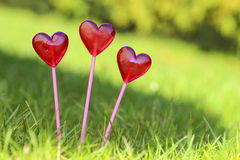 Red lollipops in heart shape, on fresh green grass Stock Images