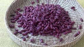 Red long bean seeds in basket.  stock video