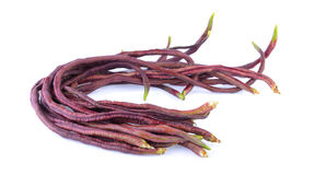 Red long bean Royalty Free Stock Image