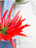 Red long Chili in a small glass bowl. On the steel door Royalty Free Stock Image