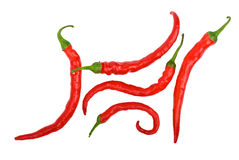Red long curved chili peppers Stock Images