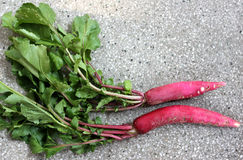 Red long radish. Mooli, Raphanus sativus, root vegetable with long lobed leaves and reddish-pink fleshy root up to 40 cm long, white inside, used as salad stock photos