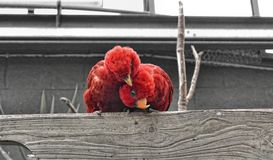 RED LORY Stock Image