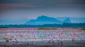 Red lotus pond. Pool light beauty bloom lotus pond Royalty Free Stock Image