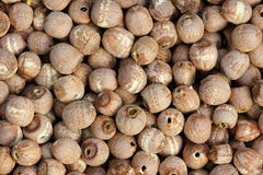 Red lotus seeds. The background of dried red lotus seeds without sprout Royalty Free Stock Photography