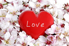 Red Love Heart. In a bed of springflowers Stock Photo