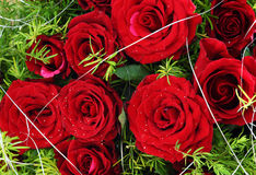 Red love rose bunch, roses Stock Photos