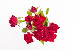 Red love roses flowers bouquet close up on a white background Stock Photos