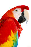 Red macaw Bird royalty free stock photography