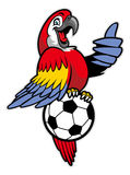 Red macaw bird stand over the soccer ball Stock Image