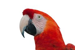 Red Macaw head close-up Stock Photos