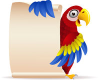 Red macaw with scroll paper Royalty Free Stock Photos