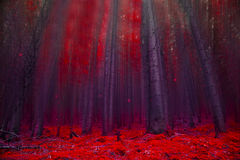 Red magic forest with lights Stock Photos